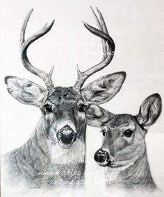 Free Deer Print Wood-Burning Patterns | Burt and Beulah, Whitetail Deer