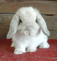 Lively rabbit #rabbitdaily