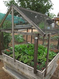 Need to keep out the critters? Here's a square foot garden with substantial cover.