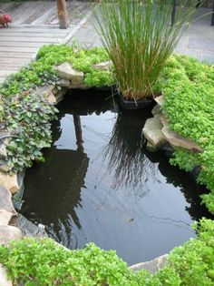 Small Fish Pond For Home Garden