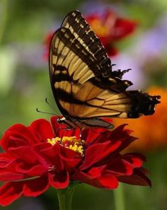 Some of my favorite butterfly images!