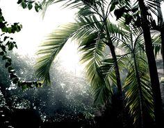 jungle-sorbet:  • follow jungle-sorbet for more tropics•