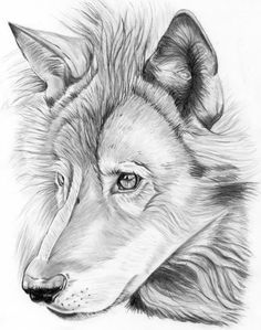 Lobo por JulioBarillas - Animales | Dibujando.net Wolf Tattoos, Tattos, Pencil Drawings, Art Sketches, Motivational, Deep, Craft, Pet Art, Blue Nails