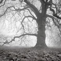 Clonbrock | Mystic Landscapes by Zoltan Bekefy Photography