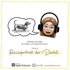 Die 🎙 Dackel-Folge: endlich ist sie da 🤩 ...die einen lieben ihn, die anderen hassen ihn - es geht um den Dackel! Gehörst du zu den Menschen, die ihn toll finden? Oder hast du vl sogar einen? Dann wirst du mir vermutlich in vielen Punkten der Podcastfolge zustimmen ;-). Magst du Dackel nicht so gerne? Dann kann ich dich eventuell in dieser brandneuen Podcastfolge davon überzeugen, dass Dackel ganz tolle Hunde sein können, wenn sie im Alltag richtig gefördert und gefordert werden. Denn sie… Lisa, Movies, Movie Posters, Instagram, Weenie Dogs, Puppys, People, Amazing, Guys
