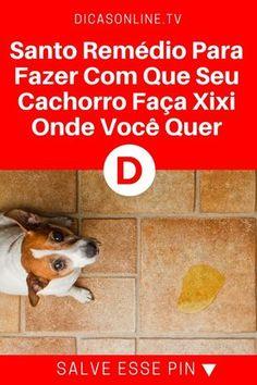 Ensinar cachorro   Santo Remédio Para Fazer Com Que Seu Cachorro Faça Xixi Onde Você Quer! Funciona mesmo!