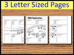 DNA Replication Foldable - Big Foldable for Interactive Notebooks or Binders 3 Letter, Letter Size, Dna Replication, Science Biology, Interactive Notebooks, Graphic Organizers, Makeup Organization, Teacher Pay Teachers, Binder