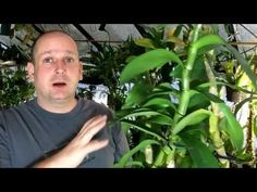 How to Grow Dendrobium | Plant Seeds, Bulbs & seedlings for Sale
