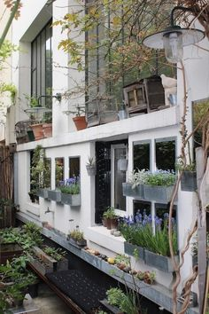 A Rooftop and Entryway Garden in Paris