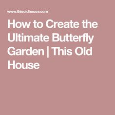 How to Create the Ultimate Butterfly Garden   This Old House