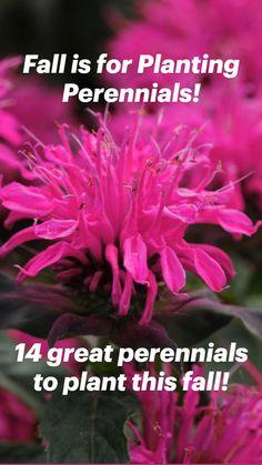 Fall Planters, Shade Perennials, Growing Seeds, Summer Garden, Garden Planning, The Great Outdoors, Garden Plants, Fall Decor, Backyard