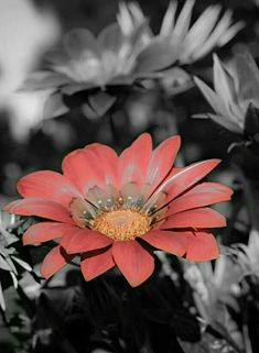 black and white touch of color by beautiful soul Splash Photography, Spring Photography, Color Photography, Narrative Photography, Sunflower Pictures, Sunflower Art, Beautiful Soul, Beautiful Flowers, One Color