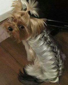 Dog braided hair