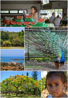 At Noumea, New Caledonia, President's Club member Jeff headed to the local markets, walked through the town and made way to Parc Forestier, a botanical garden containing both flora and fauna.