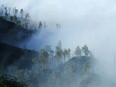 Indonesia#Foto di Dodò