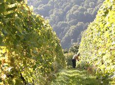 Sharpham Vineyard English Wine and Cheese   England Wines