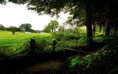 Forest of Dean - Bracelands