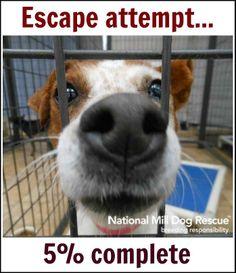 Escape attempt! #NMDR #rescue #puppymillsurvivor