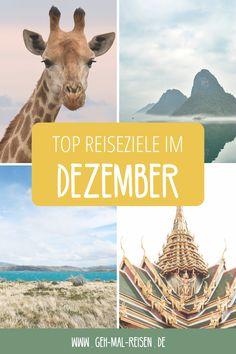 Welche Reiseziele eignen sich am besten für eine Reise im Dezember? In welchen Ländern kannst du am besten Urlaub machen? Wir verraten dir es auf unserem Reiseblog! #gehmalreisen #reisetipps #reiseziele Belize, Nassau, Strand, Fall, November, Movies, Movie Posters, Venezuela, Central America