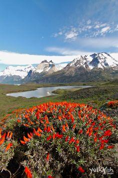 hike #TorresDelPaine #NationalPark #Chile