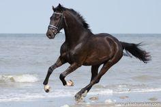 WAUW! Wil jij ook zulke foto's van jouw paard of pony? Coupony biedt een fotoreportage van Jikke Husken fotografie aan met 35% Coupony Korting voor maar €32,50!  http://www.coupony.nl/deals/paarden-fotoshoot-jikke-huesken