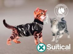 Suitical - Puutty Power!