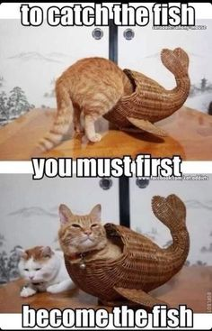 To catch the fish, you must first become the fish funny memes meme humor funny memes animal memes cat memes Cute Animal Memes, Funny Animal Quotes, Animal Jokes, Cute Funny Animals, Funny Quotes, Cat Quotes, Animal Captions, Quote Meme, Funny Cat Memes