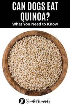Can dogs eat quinoa? Keep your dog safe and find out what you need to know about dogs eating quinoa. Quinoa Pasta, Banana Bars, Can Dogs Eat, Dry Dog Food, Love Eat, Dog Eating, Homemade Dog Food, How To Cook Quinoa, Different Recipes
