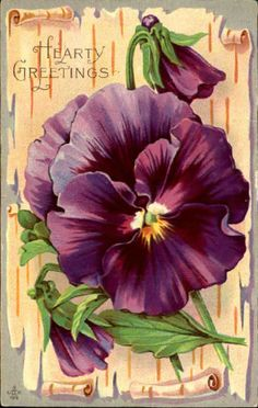 Hearty Greetings violets DPO Jackson Summit PA scroll background postcard