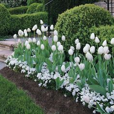 Need to remember.no more buying only a dozen tulips.and other mass planting tips for wow factor. garden flower garden plants garden vegetable arrangements diy garden ideas in front of house plant design planting succulent vegetable garden ideas Tulips Garden, Garden Plants, Planting Flowers, Garden Bulbs, Planting Tulip Bulbs, Gardening Vegetables, Plants Indoor, Flower Gardening, Shade Garden
