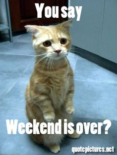 Monday Quotes - You say... weekend is over------MEON!