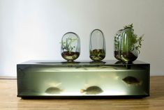 This aquarium, on show in New York, breeds freshwater fish for eating and grows vegetables in glass domes, which help to purify the water.