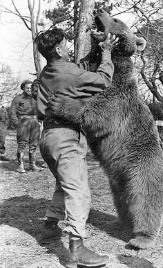 In 1942, a young Iranian boy gave an adopted bear cub to the Polish army stationed in Iran. As Wojtek (pronounced VOY-tek) grew, he was unafraid of humans, and became their unofficial mascot. This photo shows him playing with one of the soldiers. After the war, he accompanied Polish soldiers to Scotland and lived out his life at the Edinburgh Zoo. For more: www.elinorflorence.com/blog/wartime-animals
