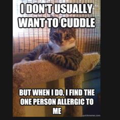 Animal Memes: The Most Interesting Cat in the World - Right In Your Face - World's largest collection of cat memes and other animals I Love Cats, Cute Cats, Funny Cats, Funny Animals, Cute Animals, Silly Cats, Funniest Animals, Funny Cat Pics, Bad Cats