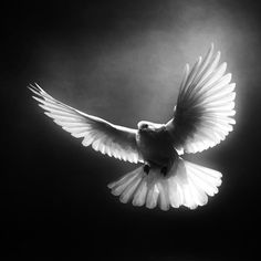 Photo Level One by Josep Sumalla on Dove Pictures, Jesus Pictures, Black White Photos, Black And White Photography, White Dove Tattoos, Dove Tattoo Design, Angel Tattoo Designs, Jesus Tattoo, Jesus Christus