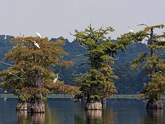 Reelfoot Lake State Park -  Tiptonville, TN, created by an earthquake that made the Mississippi flow backwards... !!!