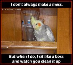 Trust me they ALWAYS make a mess.