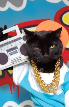 Kate Funk & her hilarious cat AC