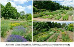 Bylinková zahrada Brno (Centrum léčivých rostlin Lékařské fakulty Masarykovy…