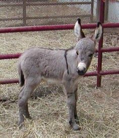 who knew baby donkeys were so cute?