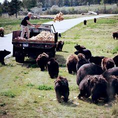 Bear Country, Rapid City - South Dakota