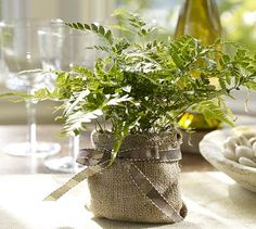 Live Rabbit Foot Fern. Plastic pot covered on burlap. See bunny foot over edge of burlap!
