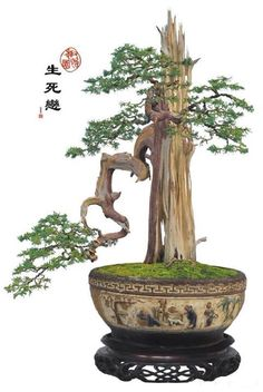 Wow this is gorgeous! #Bonsai #Follow us on #Pinterest for more!