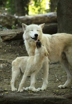 Mama Wolf and Her Cub