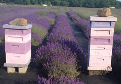 Langstroth bee hive | 16 Bee Hive Plans - Build a safe place to save the bees! at http://pioneersettler.com/best-bee-hive-plans