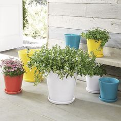 Pepper your patio with our zesty terra cotta planters decked out in festive brights. Pair with matching saucers or use our coordinating Wall Planter Hook (sold separately) to hang a rainbow of sunny color on exterior or sunroom walls.