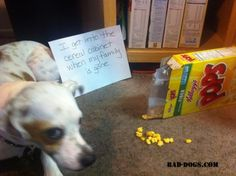 Breakfast is the most important meal of the day!  #dogshaming #baddogs