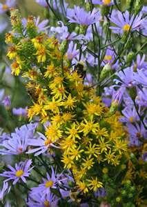 wild flowers of Okla