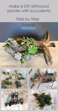 DIY driftwood planter repurposed from the trunk of a fallen Cedar tree. Covered with succulents and moss. Step by step tutorial. #driftwoodplanter #diycrafts #repurposed