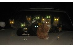 19 Hilariously Evil Cats Who Are Actually Minions Of The Dark Lord (Slide #16) - Pawsome